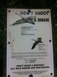 Don't Shoot A Swan